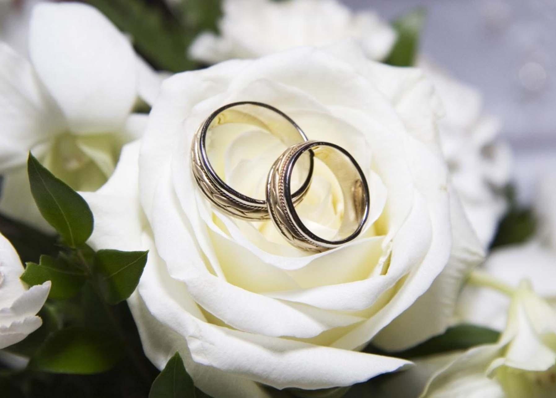Свадьба. Услуги по организации и проведению свадеб в Москве и